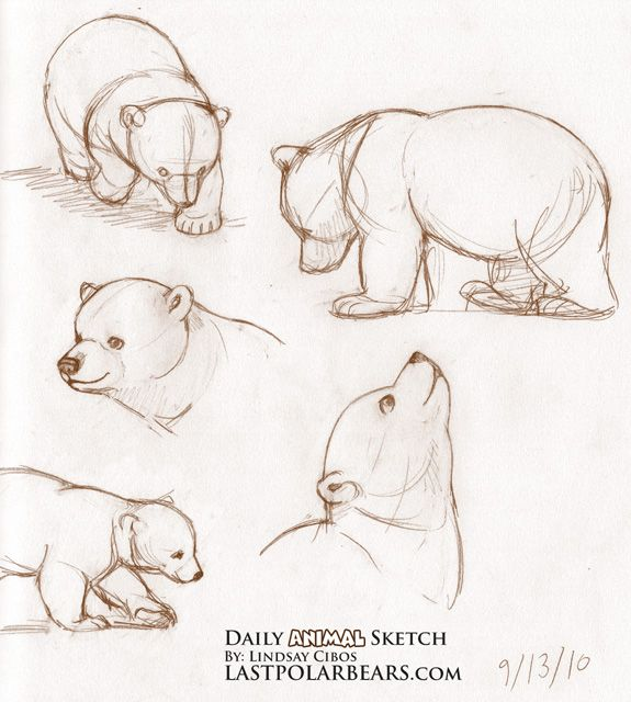 Drawn polar  bear baby animal Images Daily Bear this best