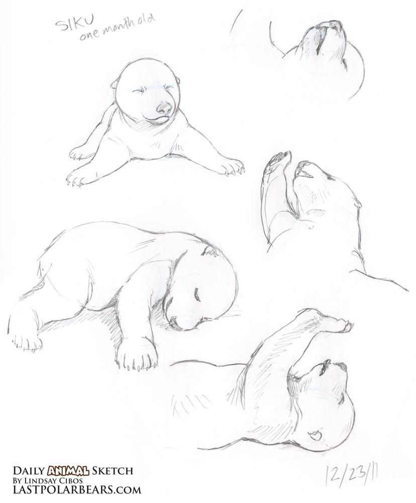 Drawn polar  bear baby animal Page Last Here's Polar of