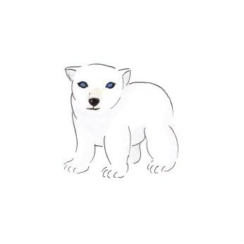 Drawn polar  bear baby animal I animals! Polar Things Baby