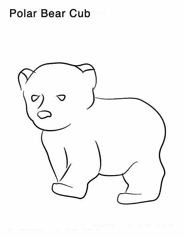 Drawn polar  bear baby panda Photo  Pages And Amazing