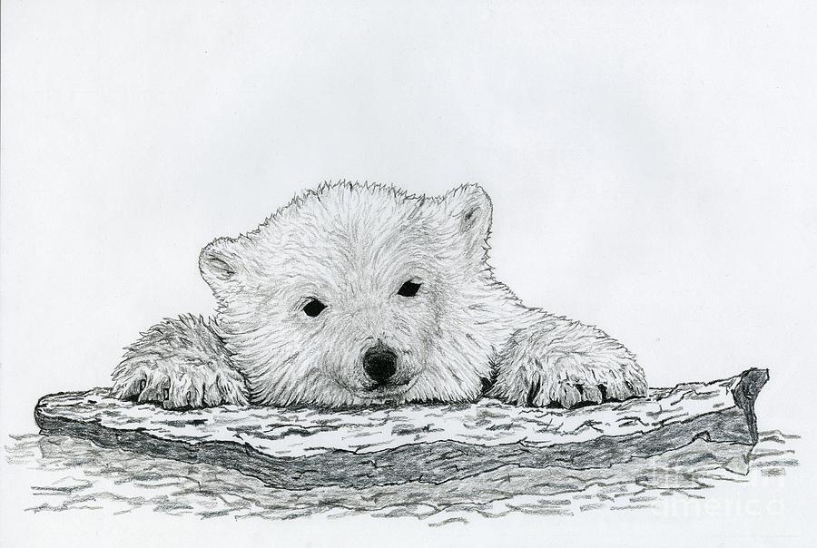 Drawn polar  bear bear cub Polar Bear Cubs Cubs Cub