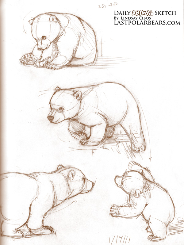 Drawn polar  bear bear cub Bears ideas sketching this Last