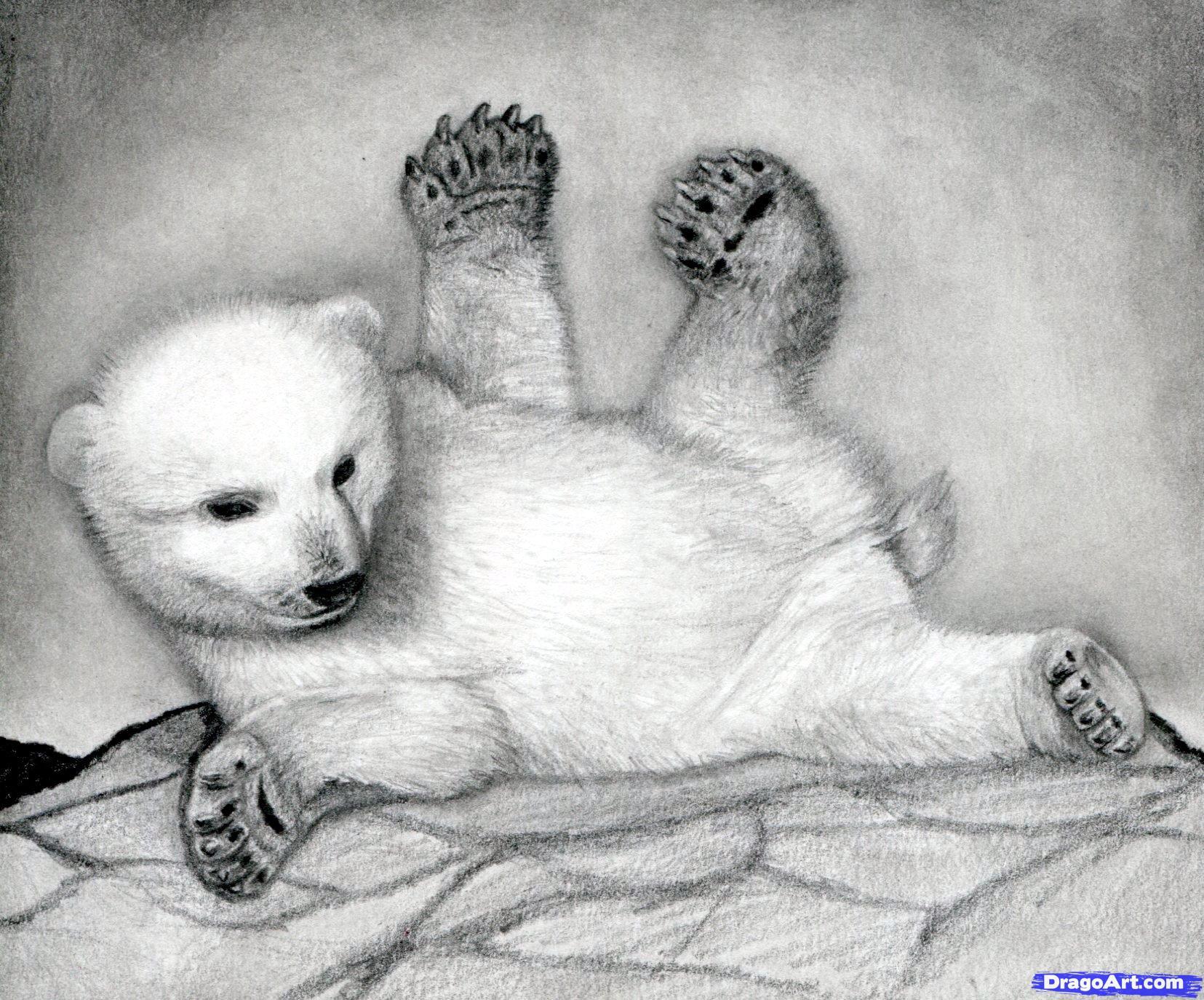 Drawn polar  bear bear cub Polar Bears Bear to How