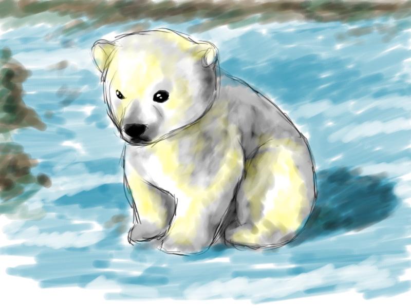 Drawn polar  bear bear cub Chiu polar by bear discovered