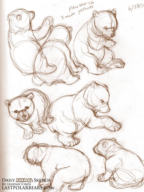 Drawn polar  bear bear cub Polar Bear Bears Bear –