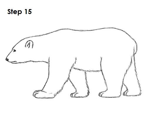 Drawn polar  bear black and white Polar 15 to a Bear