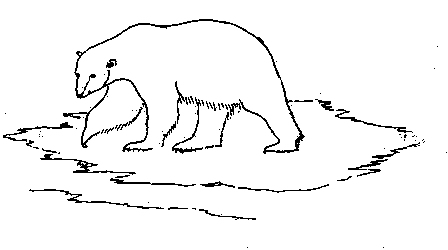 Drawn polar  bear black and white Institute Polar Scott Research Cambridge