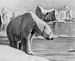Drawn polar  bear clipart Art art Polar Bear bear