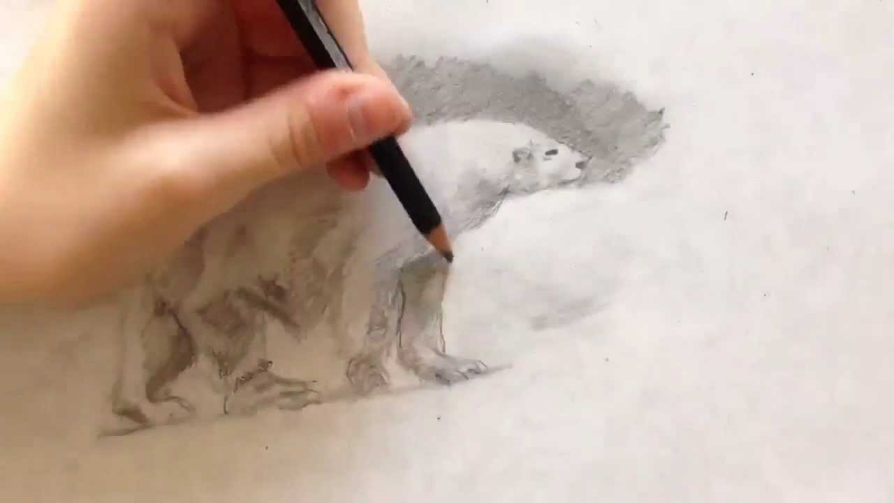 Drawn polar  bear color Bear YouTube Bear Polar Lapse)