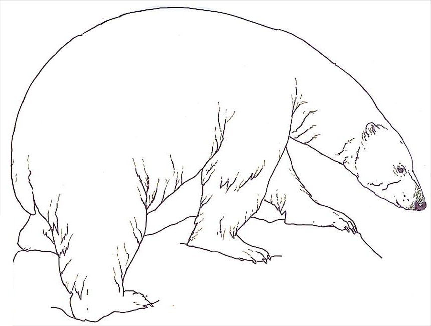 Drawn polar  bear color Free Kids For Polar Polar