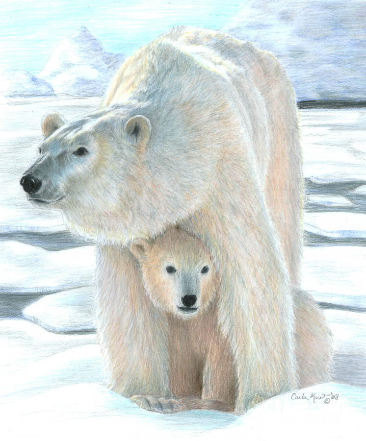 Drawn polar  bear color Canvas Suzanne Carol /
