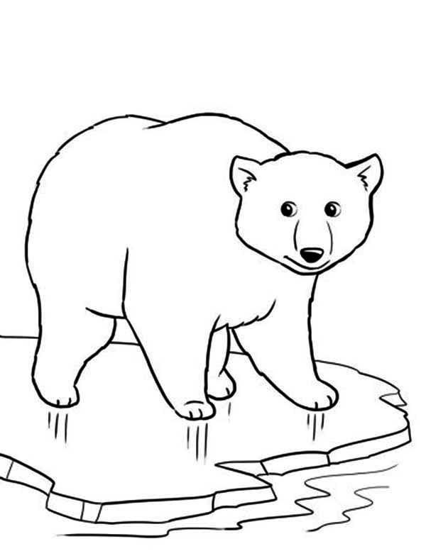 Drawn polar  bear color Coloring  bear coloring bear