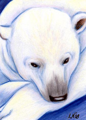 Drawn polar  bear color Colored Drawing ACEO Nelson M