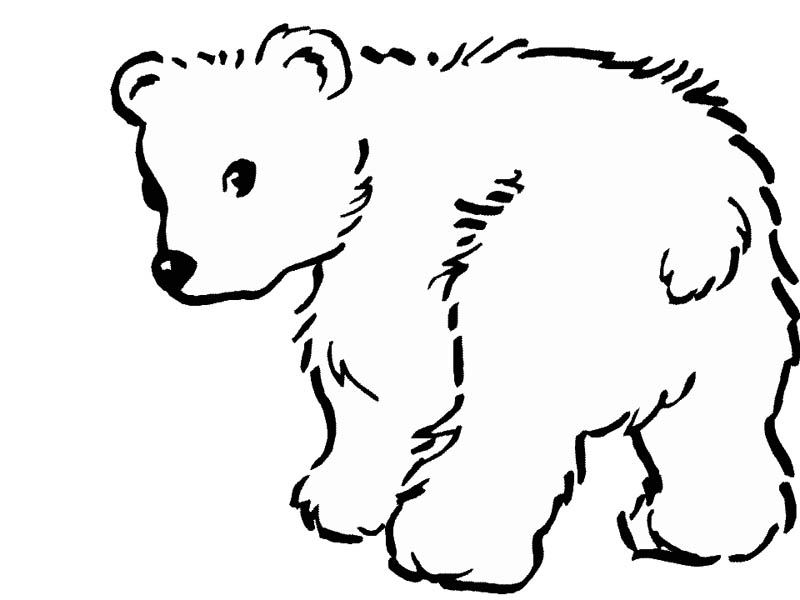 Drawn polar  bear color Drawing to pictures drawing of