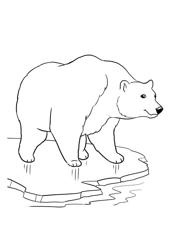Drawn polar  bear coloring page Page Bear A How To