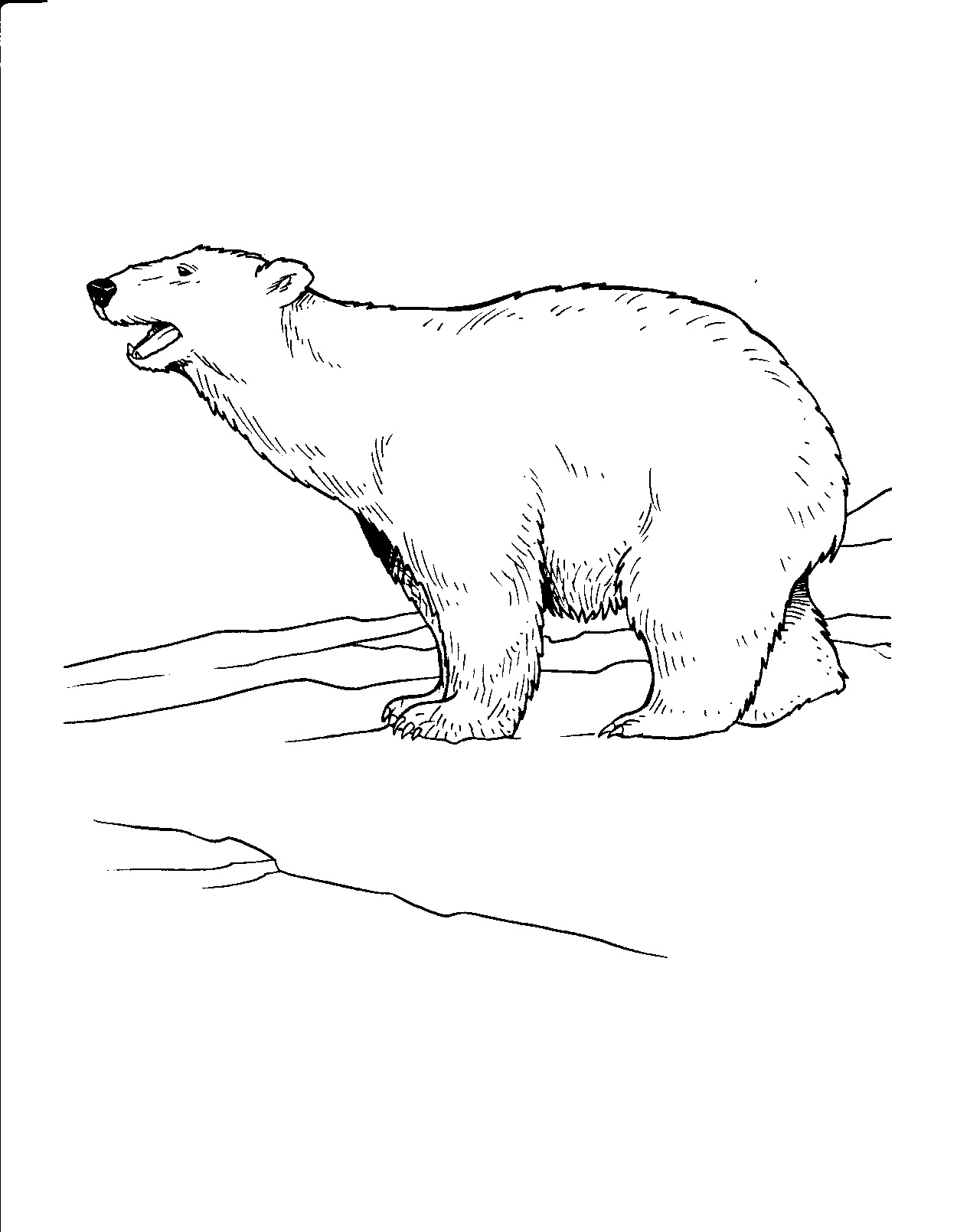 Drawn polar  bear antarctic animal Coloring Polar Coloring Bear Adult
