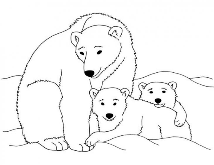 Drawn polar  bear coloring page Page Animal Polar Bear Coloring