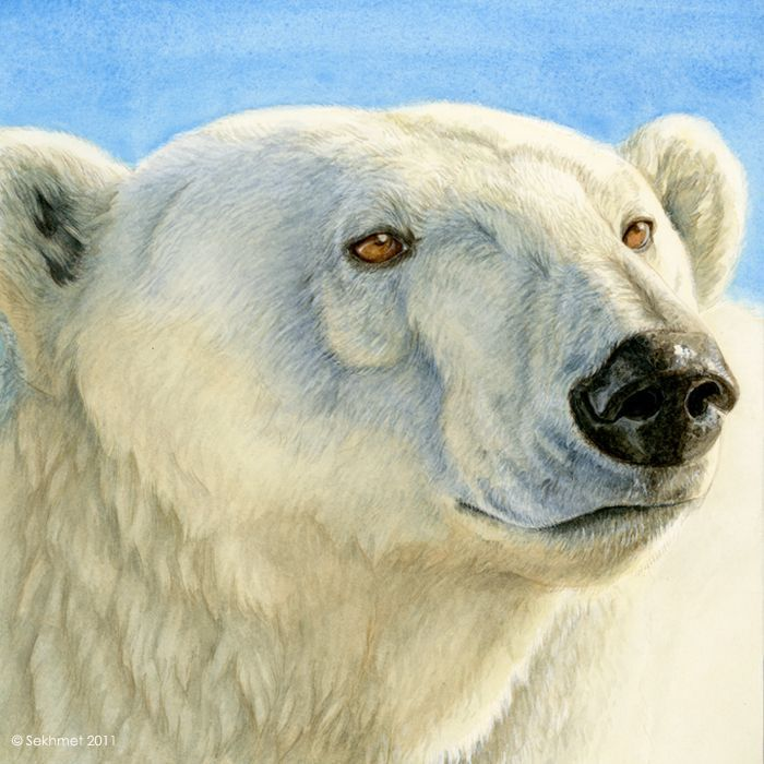 Drawn polar  bear deviantart On Polar Drawings Bears best
