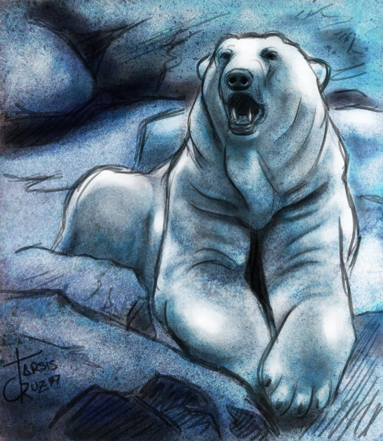 Drawn polar  bear deviantart By by deviantART  Sketch