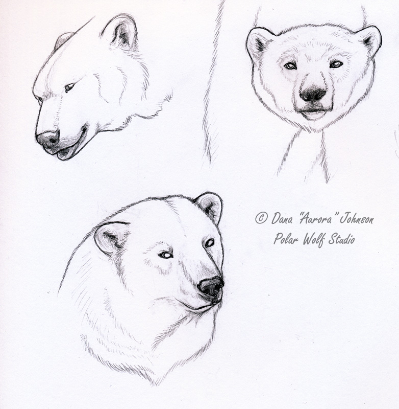 Drawn polar  bear deviantart On by Bear PolarWolfStudio by