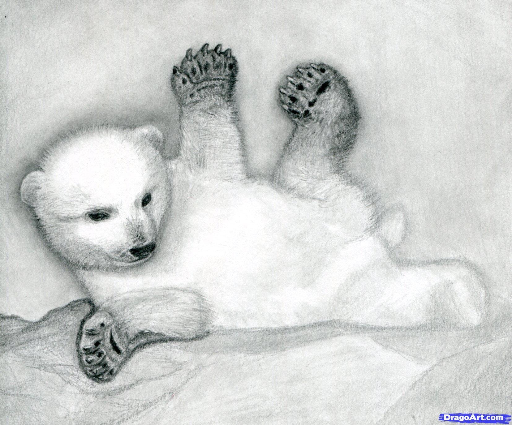 Drawn polar  bear disney Cub 13 a Polar bears