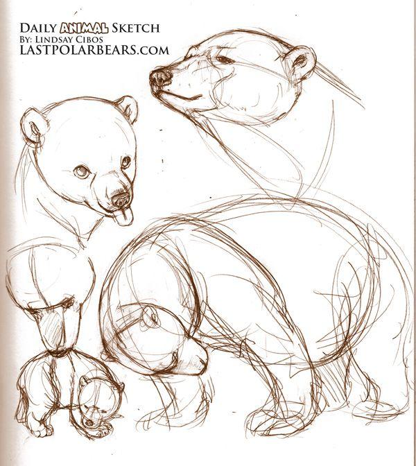 Drawn polar  bear disney Bear polar Source: 25+ photos