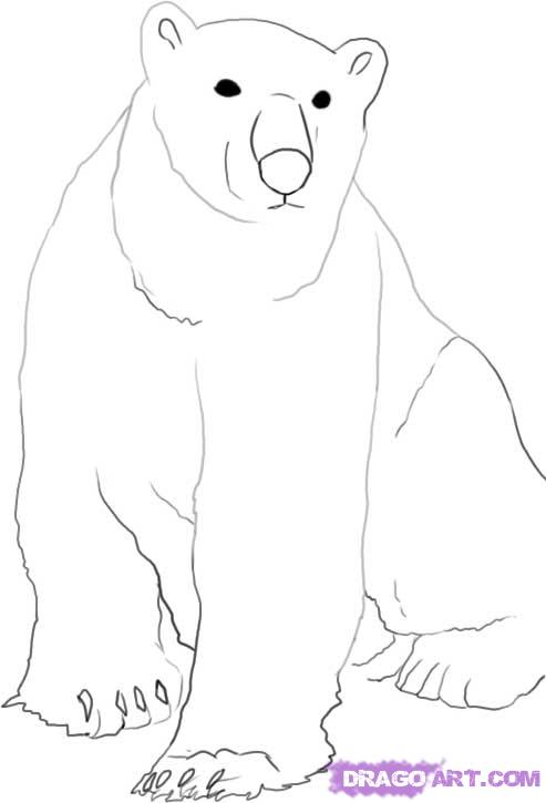 Drawn polar  bear easy Arctic how Step by to