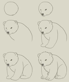 Drawn polar  bear easy  drawing Find proportions of