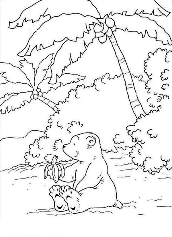 Drawn polar  bear eats Banana Lars Pages Banana At