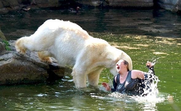 Drawn polar  bear eats Prefer (Unstable) Bear Polar CultCase:
