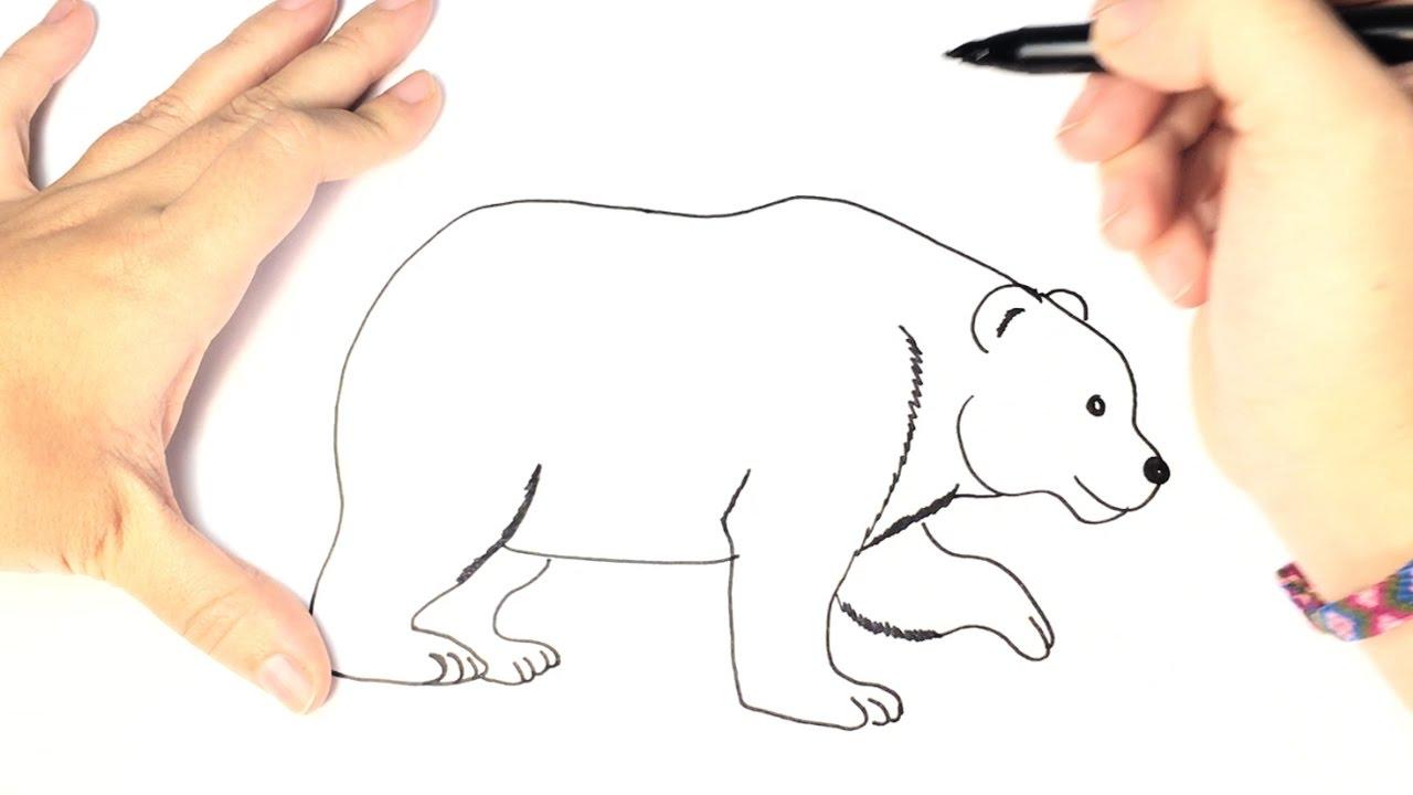 Drawn polar  bear educational To Polar for to draw