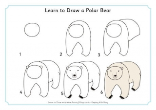 Drawn polar  bear educational To Learn Animals Bear Draw