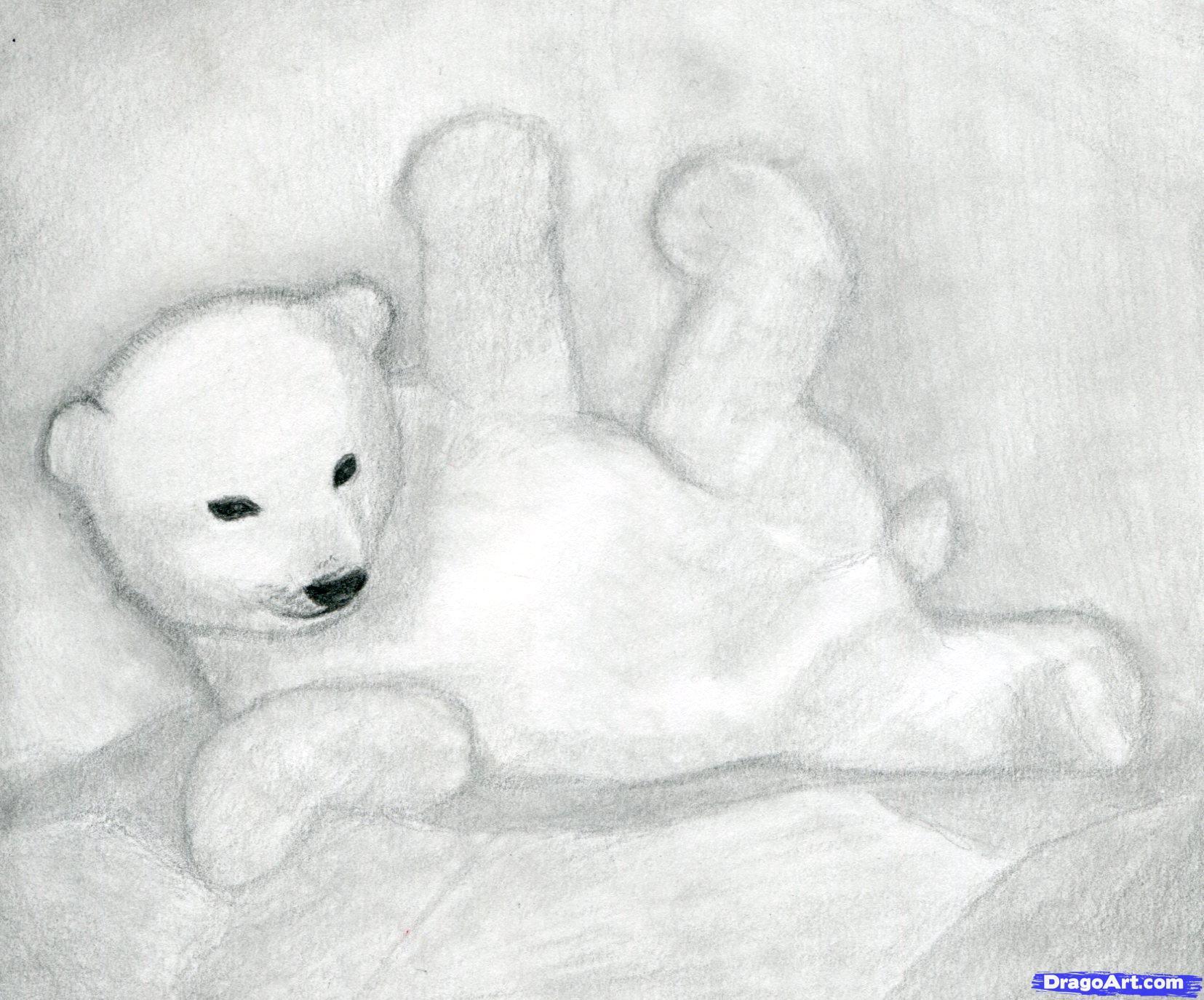 Drawn polar  bear face A Step how Arctic by