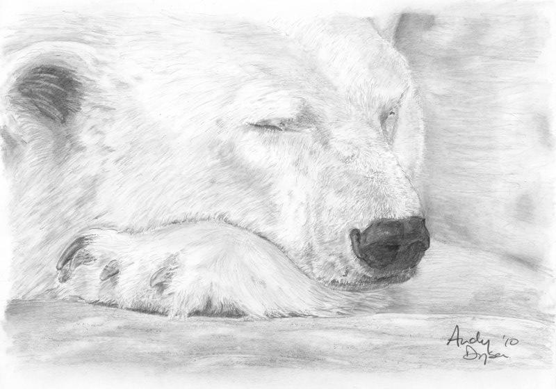 Drawn polar  bear face Polar Imgs Drawing Bear For