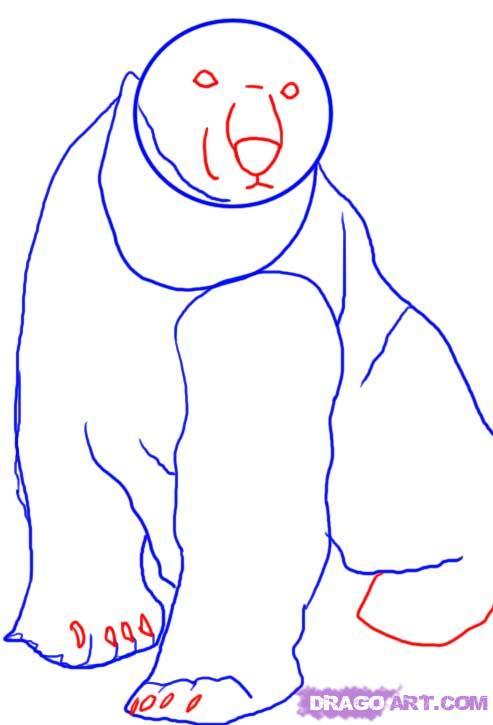 Drawn polar  bear face A How Bear polar How