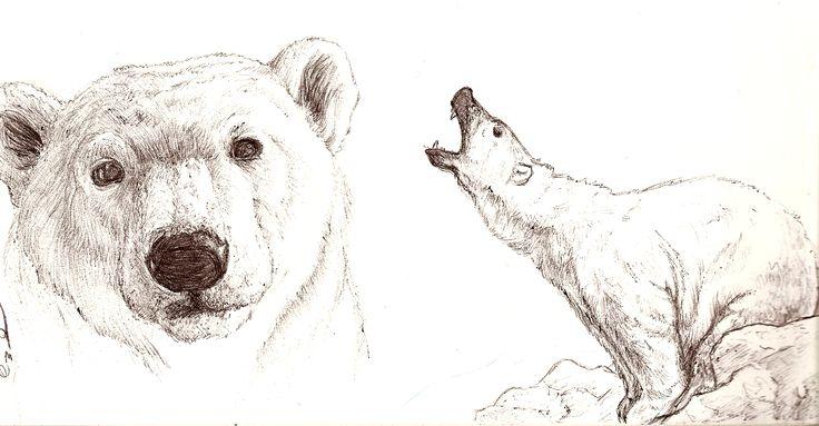 Drawn polar  bear face Drawing Realistic photo#6 Drawing Bear