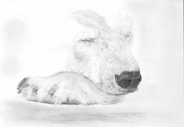 Drawn polar  bear face Confidence Polar of of WetCanvas