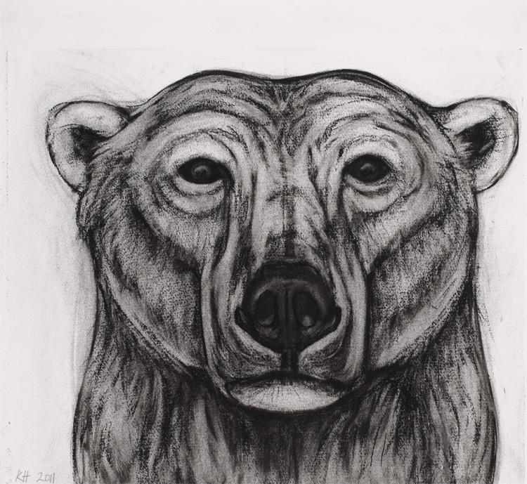 Drawn polar  bear head Drawings Bear Kendra Haste study