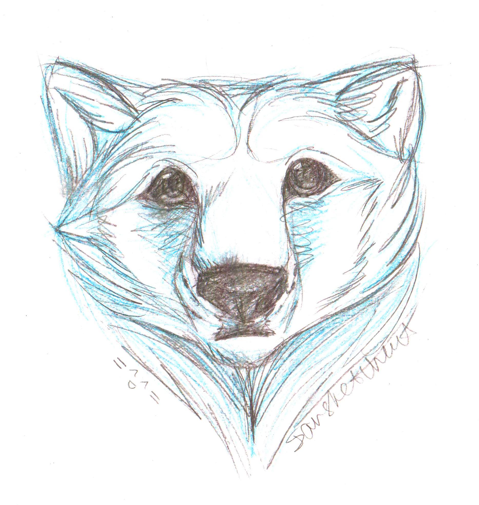 Drawn polar  bear head Polar bear bear head by