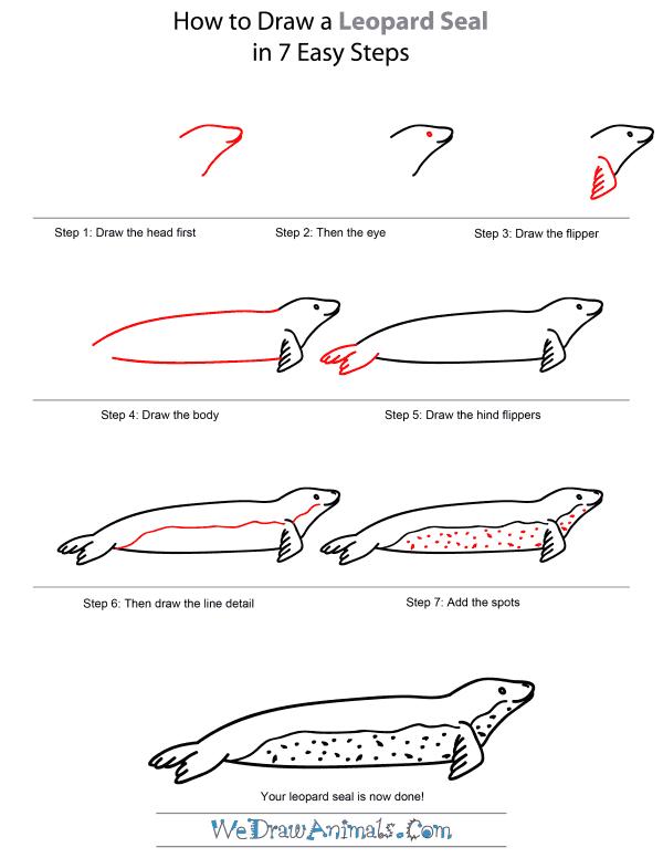 Drawn polar  bear leopard seal #4