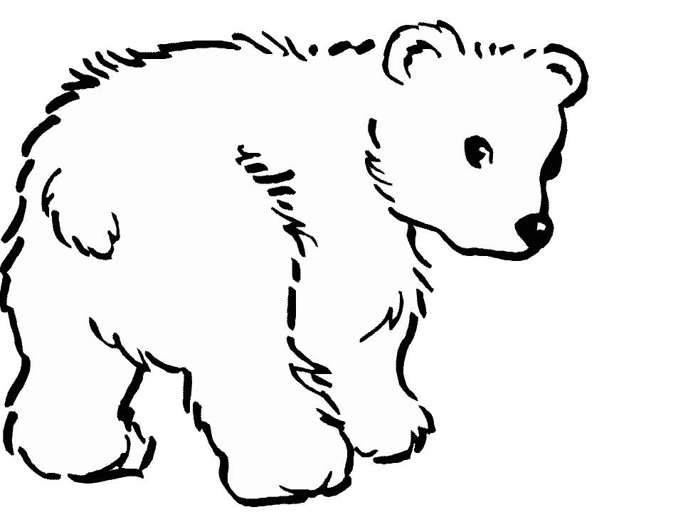 Drawn polar  bear line drawing A Bear Draw How A