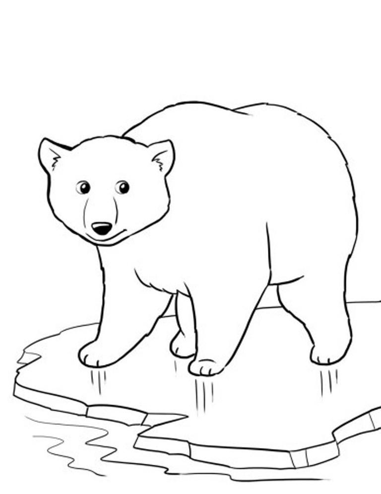 Drawn polar  bear line drawing Pencil Polar Coloring Download Bear