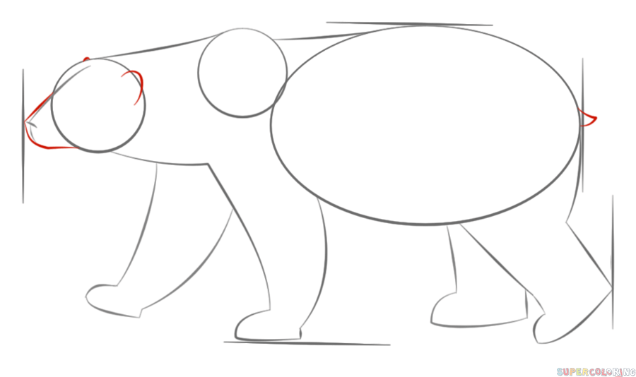 Drawn polar  bear antarctic animal To by Drawing How Step