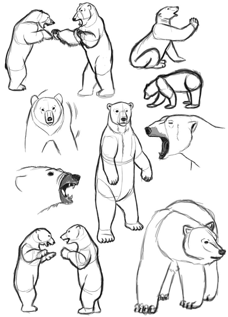 Drawn polar  bear line drawing Best on art Pinterest <3