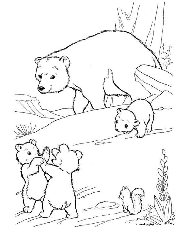 Drawn polar  bear little bear Little Coloring Page Themselves Bear