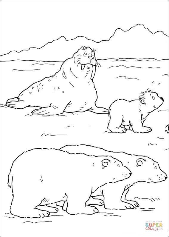 Drawn polar  bear little bear Lars Click Daddy Polar Mommy