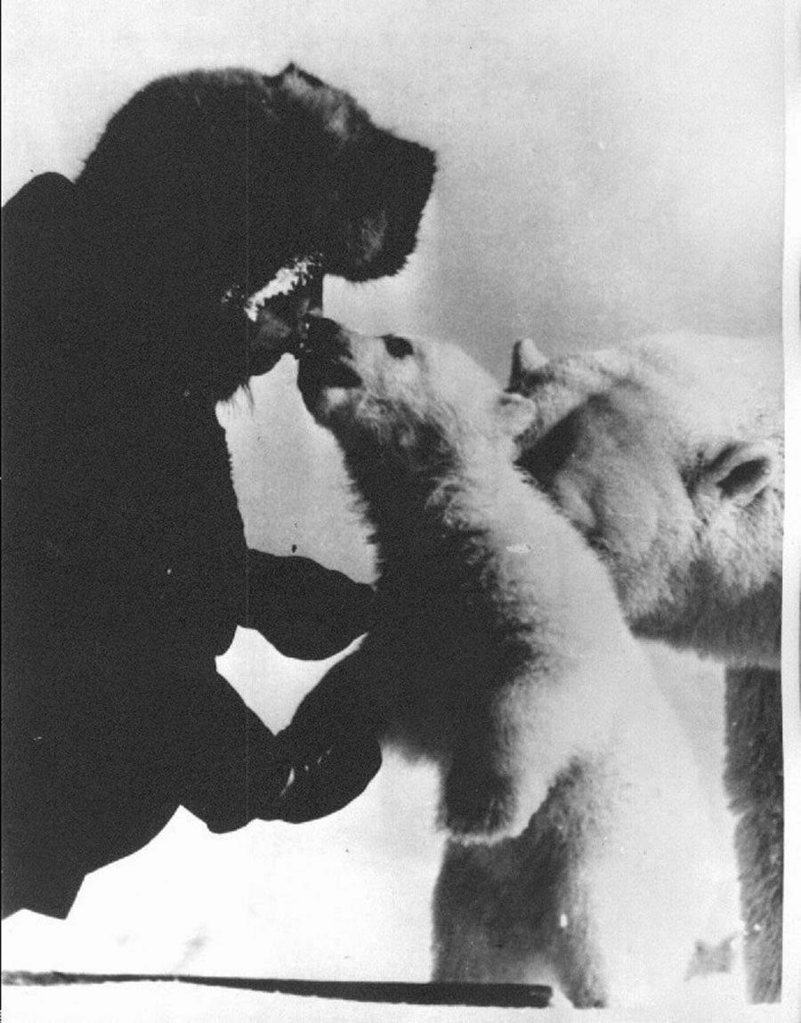 Drawn polar  bear man eater Polar from tank the a