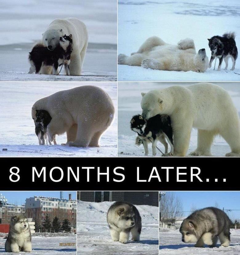 Drawn polar  bear man eater Polar Picture Bear Comment
