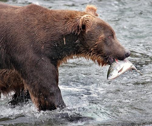 Drawn polar  bear man eater Images ManEater Pinterest Pin best