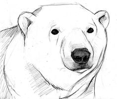 Drawn polar  bear mother bear  Polar bear Cub and